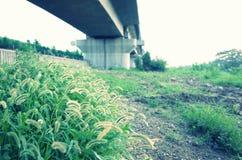 Zielony bristlegrass pod mostem fotografia royalty free