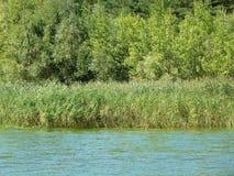 Zielony brzeg rzeki Obrazy Royalty Free