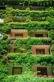 Zielony budynek zakrywający bluszcz Zdjęcia Stock