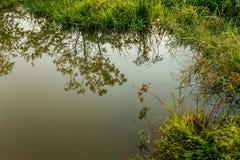 Zielony bujny zdjęcie stock