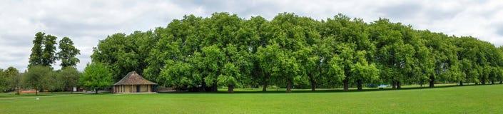 zielony Cambridge park Jesus Obrazy Stock