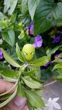 Zielony Caterpillar Obrazy Stock