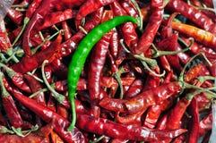 Zielony chłód na czerwonym chłodnym tle Fotografia Stock