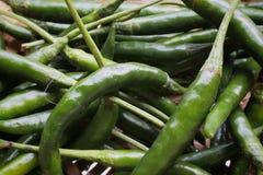 Zielony chili w ten sposób świeży zdjęcie stock