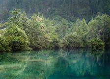 zielony cień Fotografia Royalty Free