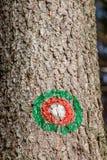 Zielony czerwony blask na drzewie obrazy stock