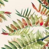 Zielony czerwony Tropikalny lub dżungla opuszczamy na lekkim pastelowym tle, zakończenie up Zdjęcia Stock