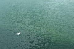 Zielony Danube obrazy royalty free