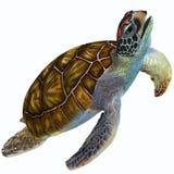 Zielony Dennego żółwia profil Obraz Royalty Free