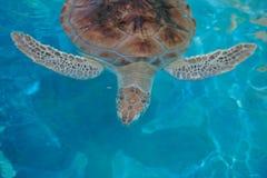 zielony denny żółw obrazy stock