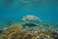 Zielony denny żółw z koralem pod morzem obrazy stock