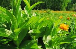 zielony do raju zdjęcie stock