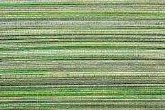 Zielony Drewniany tło lub tekstura Zdjęcia Royalty Free