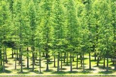 zielony drewno Zdjęcie Royalty Free