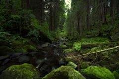 Zielony drewno Obraz Stock