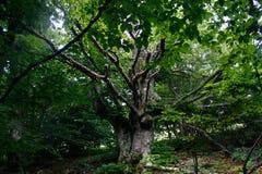 Zielony drewno Zdjęcia Royalty Free