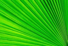 Zielony drzewko palmowe liść fotografia royalty free