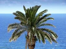 Zielony drzewko palmowe wierzchołek przed błękitnym morzem Obrazy Royalty Free