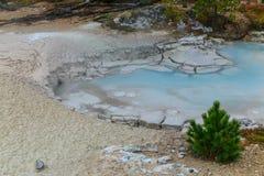 Zielony Drzewny Błękitny basen Yellowstone Zdjęcia Stock