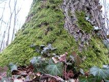 Zielony drzewny bagażnik i liście Zdjęcia Royalty Free
