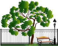 Zielony drzewny pobliski ogrodzenie i banch odizolowywający na bielu Fotografia Stock