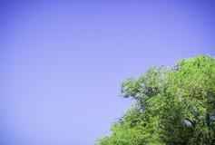 Zielony drzewny witn jasnego niebieskie niebo Obrazy Stock