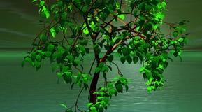 zielony drzewo Obrazy Stock