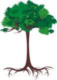 zielony drzewo Fotografia Stock