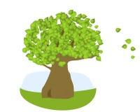 zielony drzewo Zdjęcie Stock