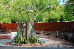 Zielony drzewo Zdjęcia Stock
