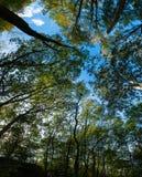 Zielony drzewo baldachim Fotografia Royalty Free