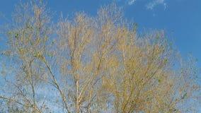 Zielony drzewo bez liści Zdjęcie Royalty Free