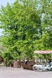 Zielony drzewo i kopia bicykl zdjęcia stock