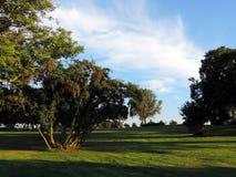 Zielony drzewo i niebieskie niebo zdjęcie stock