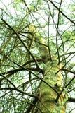 Zielony drzewo i niebo fotografia royalty free