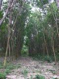 Zielony drzewo jest lasowy Zdjęcia Stock
