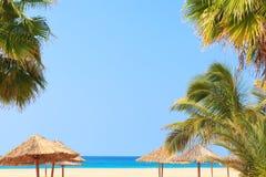 Zielony drzewo na białej piasek plaży, Boavista - przylądek Verde Obraz Stock