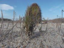 Zielony drzewo na białej piasek plaży, Pasożytniczy drzewo fotografia royalty free