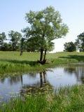 Zielony drzewo na brzeg piękny staw Fotografia Royalty Free