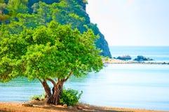 Zielony drzewo na plaży Obraz Stock