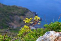 Zielony drzewo obok morza Fotografia Stock