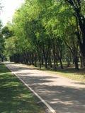 Zielony drzewo, odświeża Fotografia Royalty Free
