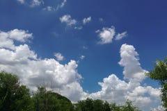 Zielony drzewo pod niebieskim niebem z pięknymi chmurami Zdjęcia Stock