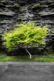 Zielony drzewo przed rockową ścianą przy Watkins roztoki stanu parkiem w Nowy Jork zdjęcia stock