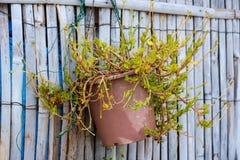 Zielony drzewo w ceramicznym flowerpot obwieszeniu na drewnianym ogrodzeniu obrazy royalty free