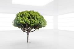 Zielony drzewo w czystym białym nowożytnym wnętrzu Obraz Royalty Free