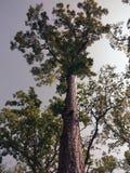 Zielony drzewo w lesie fotografia royalty free