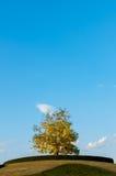 Zielony drzewo w pięknym niebie Obraz Royalty Free