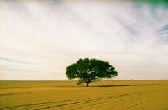 zielony drzewo w pustyni tamenrasset, Algeria fotografia stock