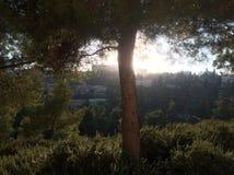 Zielony drzewo w wieczór zdjęcie royalty free